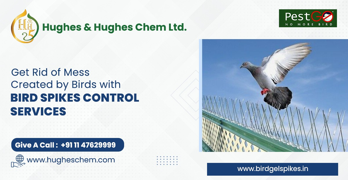 Get Rid of Mess Created by Birds with Bird Spikes Control Services