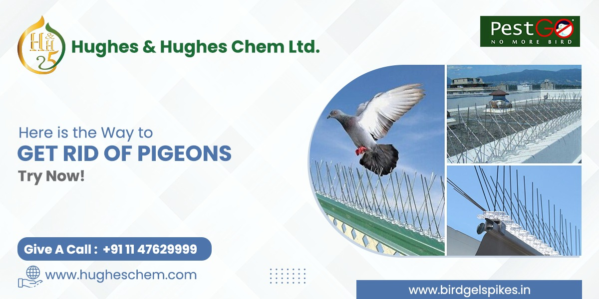Here is the Way to Get Rid of Pigeons- Try Now!