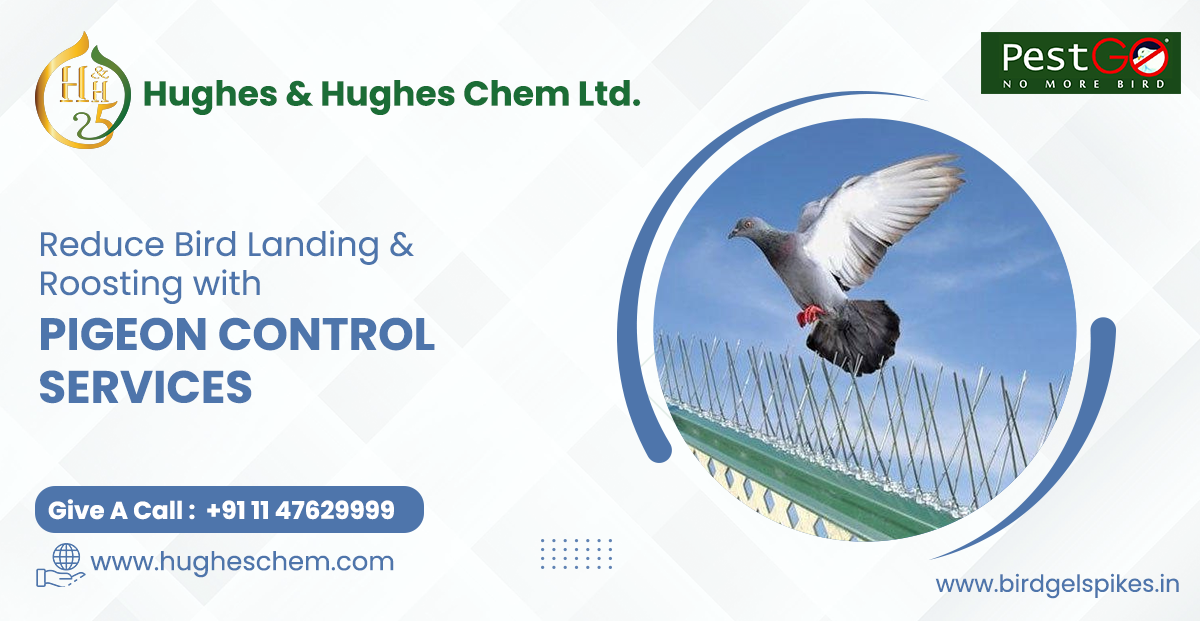 Reduce Bird Landing & Roosting with Pigeon Control Services