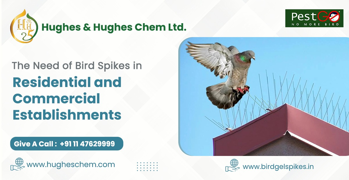 The Need of Bird Spikes in Residential and Commercial Establishments
