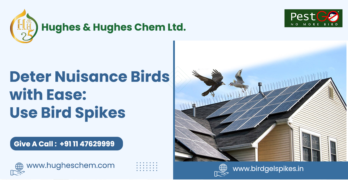 Deter Nuisance Birds with Ease: Use Bird Spikes